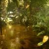Aquarias regnskog