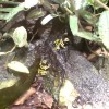 Giftiga grodor från regnskogen
